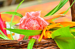Flowers to Buddhist monk Royalty Free Stock Images