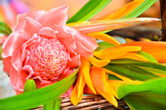 Flowers to Buddhist monk Royalty Free Stock Photo