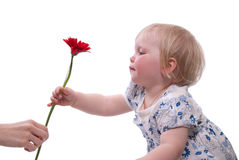 Flowers to mothers day Stock Photography