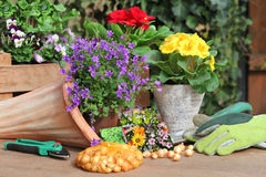 Flowers to plant, terracotta cornucopia Royalty Free Stock Photography