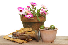 Flowers and tools Royalty Free Stock Photos