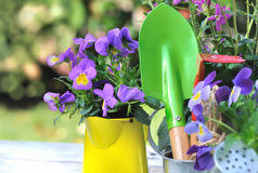Flowers and tools Stock Images