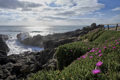 Flowers on the top of the cliff over the ocean stock photo