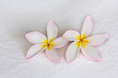 Flowers on the towel Stock Image