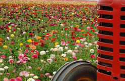Flowers and tractor Royalty Free Stock Photos