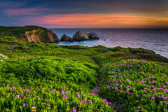 Flowers and trail on a bluff above Rodeo Beach at sunset  Royalty Free Stock Photography