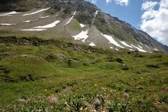 Flowers on trail, Nufenenpass, Switzerland Royalty Free Stock Photography