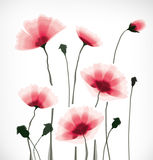 Flowers. Transparent flower background in wind Stock Photos
