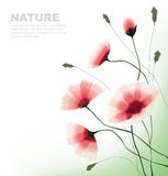 Flowers. Transparent flower background in wind Stock Images