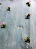 Flowers trapped in a tarp Stock Photo