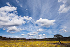 Flowers and tree. Yellow flowers field with an old tree at the corner Stock Image
