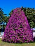 The flowers tree Stock Image