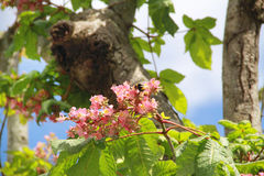 Flowers in tree Stock Photo