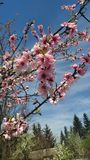 Flowers tree sky royalty free stock images