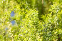 Flowers on the tree spring willow. In the park in nature stock photography