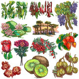 Flowers and trees around the world - an hand drawn collection, f Stock Photo