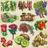 Flowers and trees around the world - an hand drawn collection, f Royalty Free Stock Photo