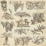 Flowers and trees around the world - an hand drawn collection, f Royalty Free Stock Images