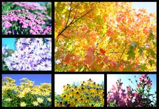 Flowers and trees autumn Stock Images