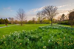Flowers and trees at Cylburn Arboretum in Baltimore, Maryland.  royalty free stock photography
