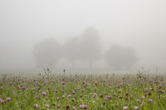 Flowers and trees in morning mist Stock Photos