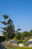 Flowers and trees in park with clear sky. Flowers and trees in national park with clear sky Royalty Free Stock Images
