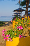 Flowers and trees on a path to the beach at morning sunshine, Sithonia Royalty Free Stock Photos