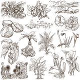 Flowers, Trees, Plants - An hand drawn pack. Originals. Stock Photos