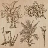 Flowers, Trees, Plants - Hand drawn vector pack. Flowers, Trees, Plants. Collection of an hand drawn vector illustrations (line art vectors - pack no.7). Each Stock Photo