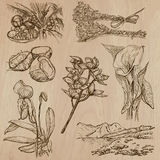 Flowers, Trees, Plants - Hand drawn vector pack Royalty Free Stock Image