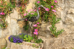 Flowers and trees. Among the stones Royalty Free Stock Photography