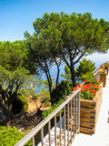 Flowers and trees. On the top of the beautiful island of Capri, Italy Royalty Free Stock Photo