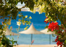 Flowers and tropcal beach. In the background Stock Image