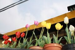 Colourful flowers on the balcony
