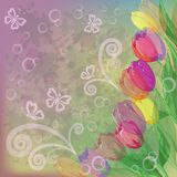 Flowers tulips on abstract background Stock Photos
