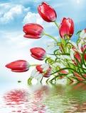 Flowers tulips Stock Image