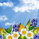 Flowers tulips on a background of blue sky with clouds. Spring landscape. Flowers tulips on a background of blue sky with clouds. hyacinth Stock Images