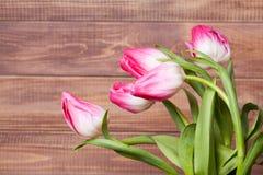 Flowers tulips Royalty Free Stock Photos