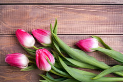 Flowers tulips Royalty Free Stock Photo