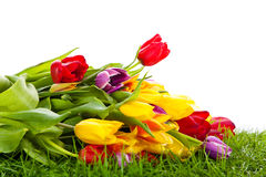 Flowers tulips in basket isolated on white background. colors, green gra Stock Photo