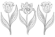 Flowers tulips, contours Stock Photography