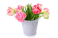 Flowers tulips in decorative bucket isolated on white Royalty Free Stock Photos