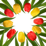 Flowers tulips for  the eighth of March Royalty Free Stock Photos