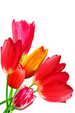 Flowers  tulips   flowering  blossoming bouquet Stock Photo