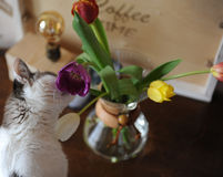 Flowers tulips in a glass container for brewing coffee as in a vase. Royalty Free Stock Photos