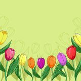 Flowers tulips on a green. Flower  background, tulips flowers and contour on a green Stock Photos