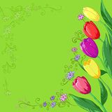 Flowers tulips on a green. Flower background, tulips flowers and contour on a green Royalty Free Stock Photos