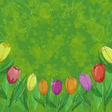 Flowers tulips on green background Royalty Free Stock Photography