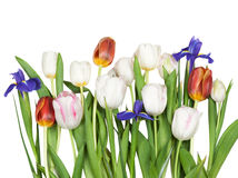 Flowers tulips, iris Royalty Free Stock Image