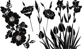 Flowers tulips irises roses. Isolated stock illustration